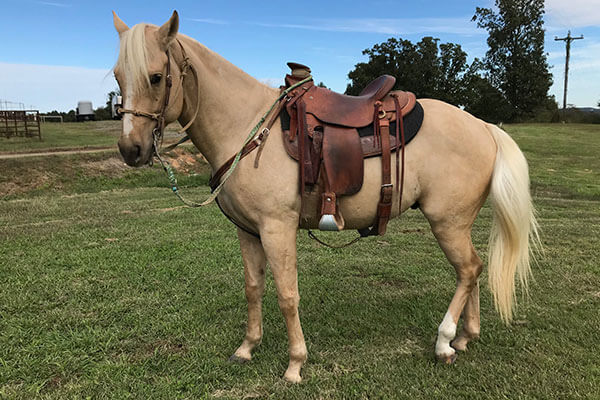 Steve Landers Little Rock >> Ranch Horses - Leis Creek Cattle Co - Red Angus & Akaushi - Little Rock, AR